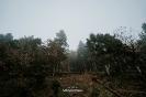 Ειδυλλιακό τοπίο με ομίχλη στη Λίμνη Πλαστήρα _9